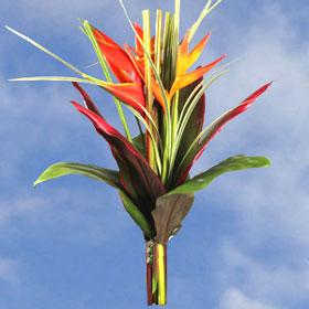 Arrangement Cayman Beauty 4 Bouquets