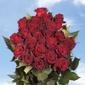200 Black Baccara Roses