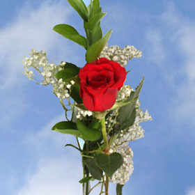 Mother's Day Single Red Roses