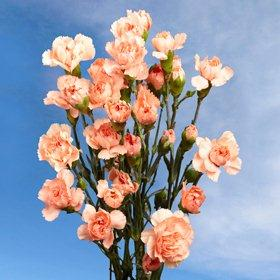 Orange Spray Mini Carnations 300