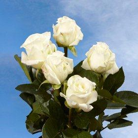 Flower Delivery Phoenix on Phoenix Az  Globalrose  Phoenix Az Wholesale Roses  Phoenix Az Flowers