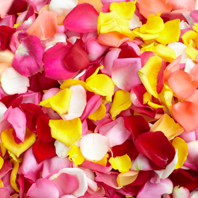 Beautiful assorted colors of rose petals global rose for Multi colored rose petals
