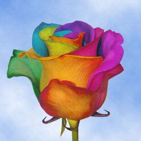 Beautiful tie dye roses global rose for Order tie dye roses online