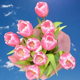 120 Best Pink White Tulip Flowers
