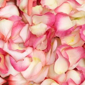 2400 Rose Petals Bi-Color