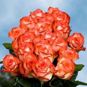 Blush Roses Long 150