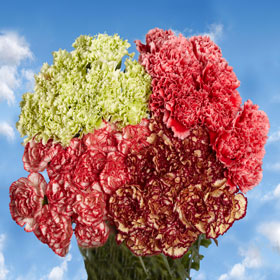200 Cheap Novelty Carnations