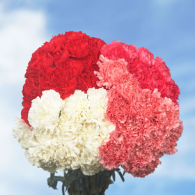 200 Cheap Valentine's Day Carnations