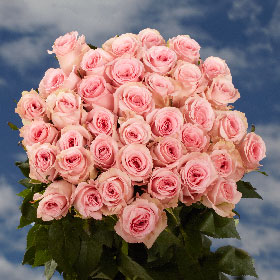 50 Pink Roses Just Gorgeous!