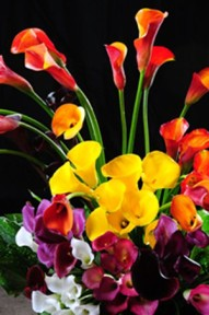 Mini Calla Lilies Assorted Colors 120 Flowers