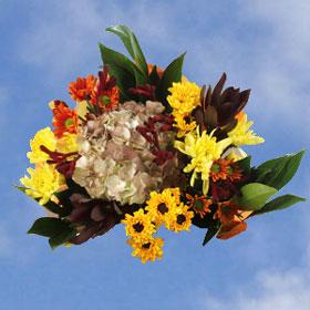 Arrangement Equinox 17 Bouquets