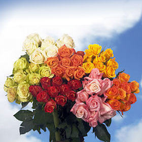 200 Gorgeous Assorted Colors Roses – Next Day Delivery