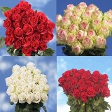 Gorgeous Bulk Red and Color Roses