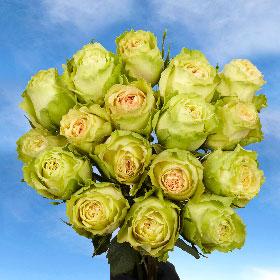 50 Light Green Roses
