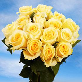 Creme de la Creme Roses Long 75 Cream Roses