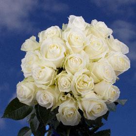 75  Long Stem Big White Roses Proud Roses