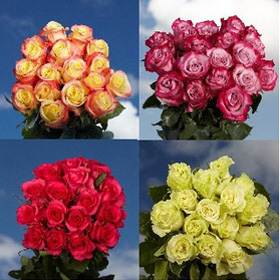 100 Assorted Roses – Next Day Delivery