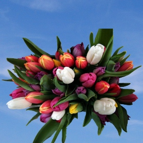 60 Assorted Tulip Flowers - Next Day Delivery