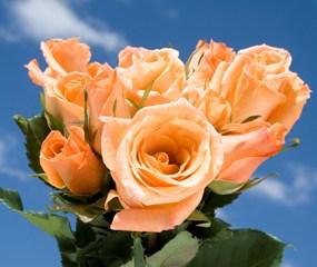 Orange Wholesale Roses