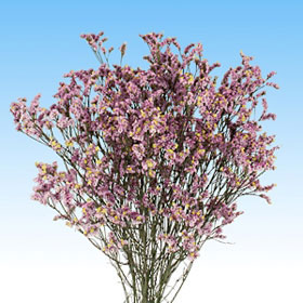Order Lavender Limonium Flowers Global Rose