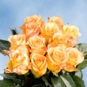 Latin Beauty Roses 200