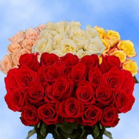50  Red Roses & 50 Color Roses    100  Beautiful Roses