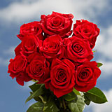 Red Roses Special