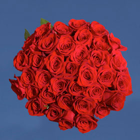 50 Red Roses – Absolutely  Lovely! – Next Day Delivery