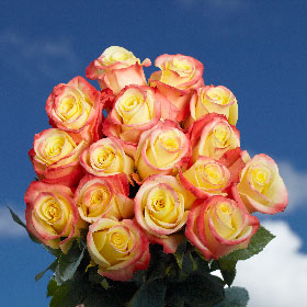 150 Long Stem Creamy Yellow With Red Tip Roses Florida Roses