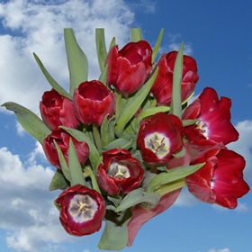60 Red Tulip Flowers - Next Day Delivery