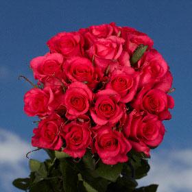 150 Long Stem Almost Red Roses Hot Paris Roses