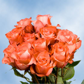 Iguana Roses Long 150 Terracotta Roses