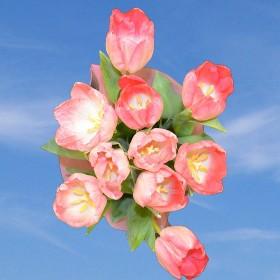 60 Pink Tulip Flowers