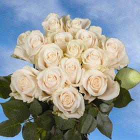 Vendela Roses 250 Ivory Roses