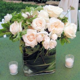 Wedding Combo D.I.Y. Enchanted 250 roses & 144 Garden Rosess &15 Bunches of Mixed Greens