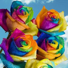 Multi-color Rainbow Roses 200 Rainbow Roses