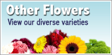 View our Other Flower Varieties